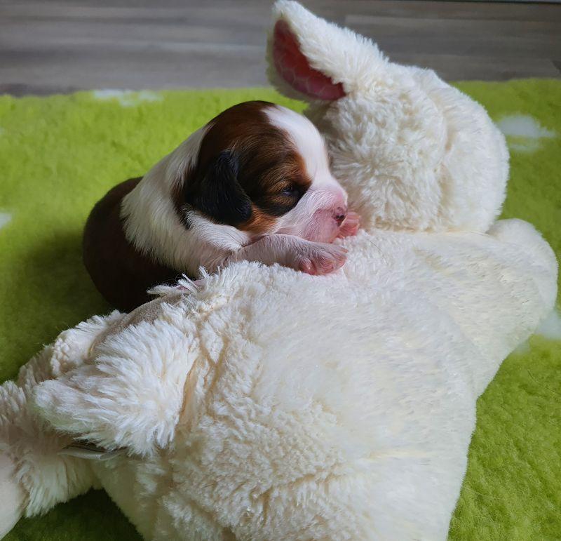 Ein Schaf zum kuscheln.