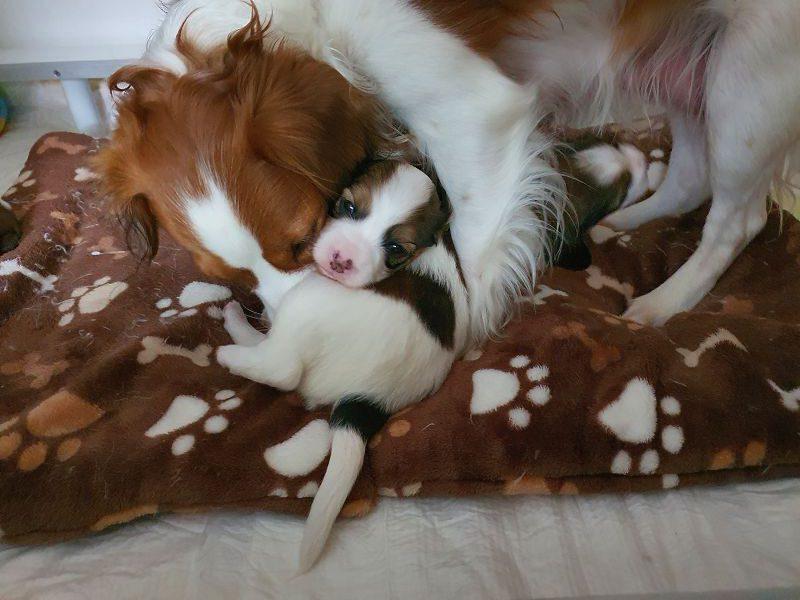 Lieber doch mit Mama!